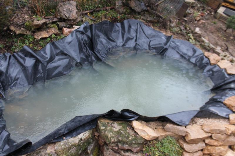 Agrandissement du bassin Img_3923
