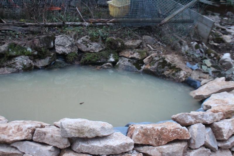 Agrandissement du bassin Img_3926