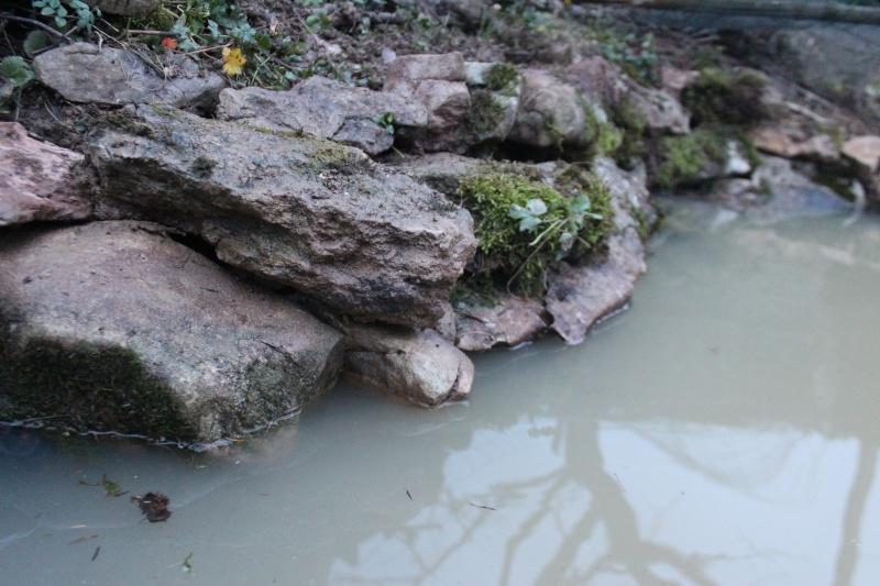 Agrandissement du bassin Img_3929