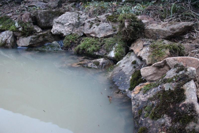 Agrandissement du bassin Img_3930