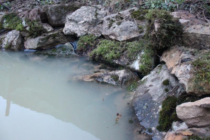 Agrandissement du bassin Img_3932