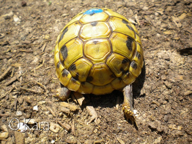 Identification de Yellow Image280