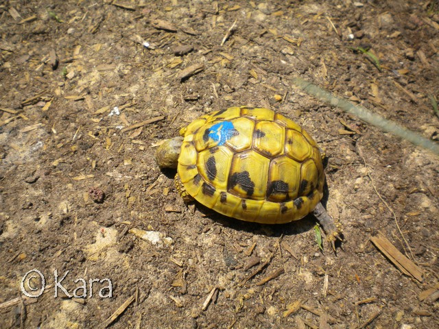 Identification de Yellow Image281