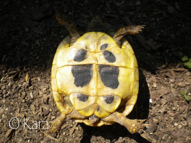 Identification de Yellow Image284