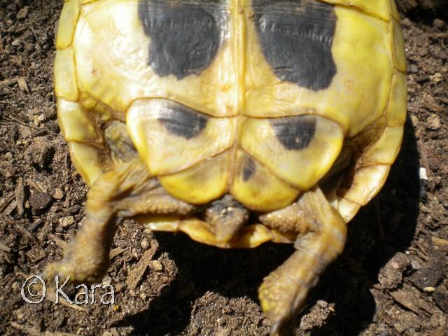 Identification de Yellow Image285