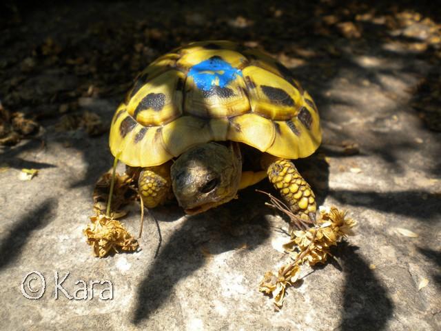 Identification de Yellow Image286