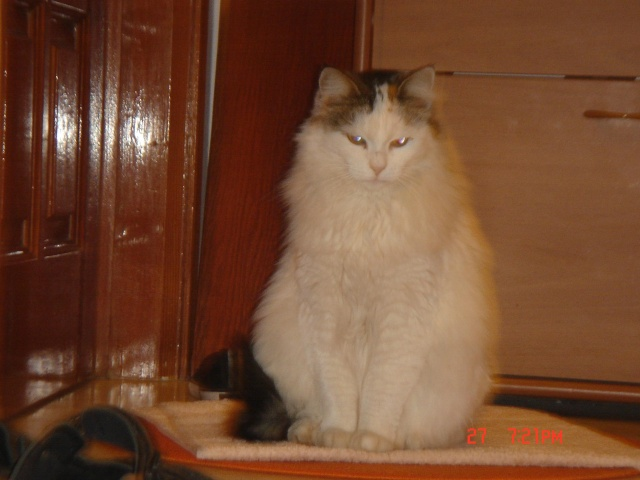 Τρίχρωμη Scarde, Ανώνυμος ασπρόμαυρος γατούλης και η γάτα με το 1 ματι!!! Aplh11