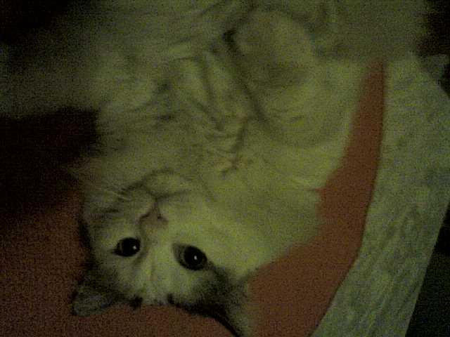 Τρίχρωμη Scarde, Ανώνυμος ασπρόμαυρος γατούλης και η γάτα με το 1 ματι!!! I10