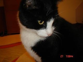 Τρίχρωμη Scarde, Ανώνυμος ασπρόμαυρος γατούλης και η γάτα με το 1 ματι!!! Royfoy10