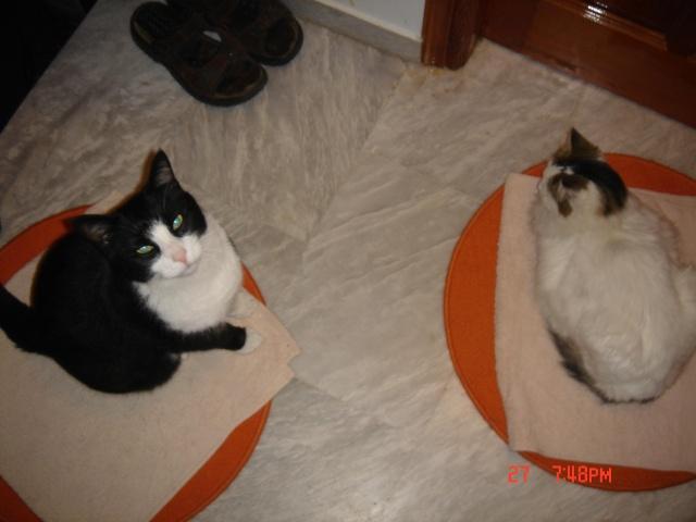 Τρίχρωμη Scarde, Ανώνυμος ασπρόμαυρος γατούλης και η γάτα με το 1 ματι!!! Royfoy11