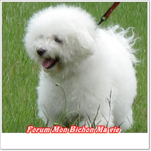 Album photos des bichons Doroth10