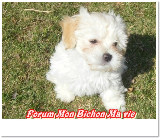Album photos des bichons Zoa22_10