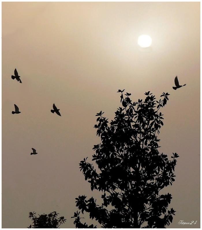 L'aube dans la brume 24057811