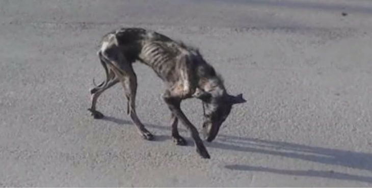 Coup de coeur-Elle pensait offrir une mort digne à ce chien agonisant. Il a choisi de vivre Billy-10