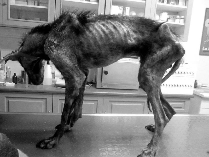 Coup de coeur-Elle pensait offrir une mort digne à ce chien agonisant. Il a choisi de vivre Billy-12