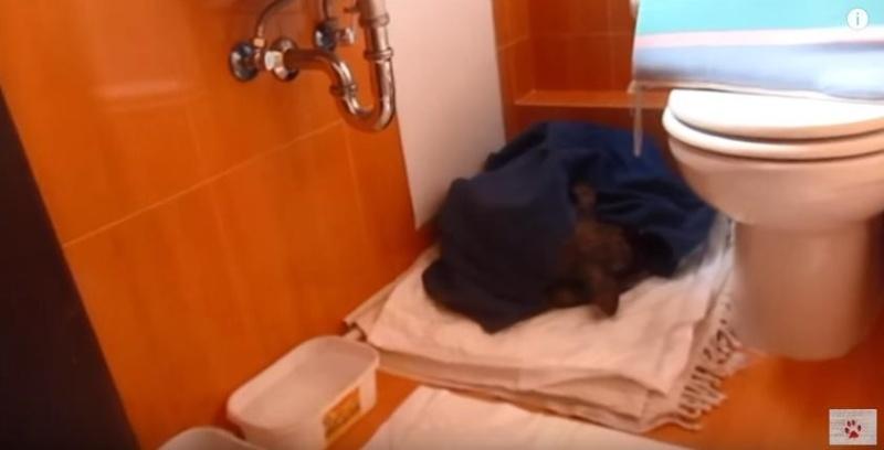 Coup de coeur-Elle pensait offrir une mort digne à ce chien agonisant. Il a choisi de vivre Billy-14