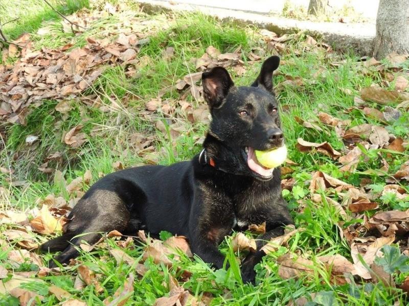 Coup de coeur-Elle pensait offrir une mort digne à ce chien agonisant. Il a choisi de vivre Billy-15