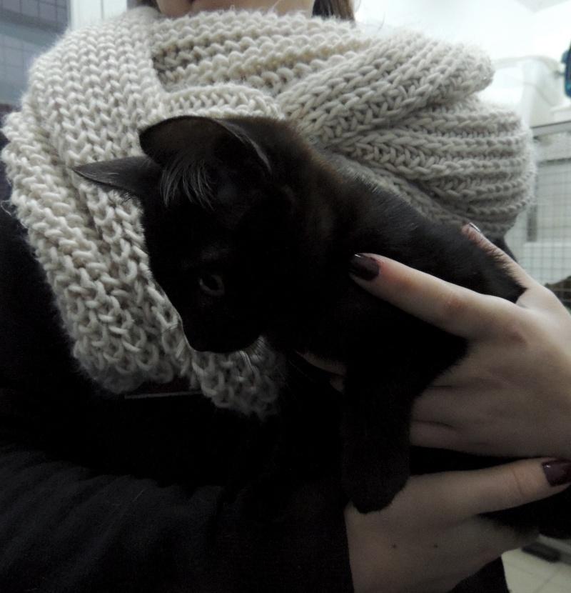 Adoption de ZIRA- 13 décembre 2015. Dimach20
