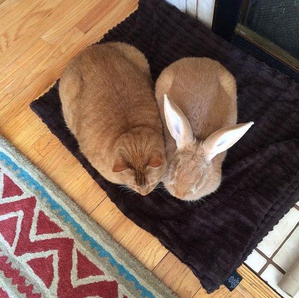 Le chat qui a un lapin géant pour frère jumeau Gus_et10