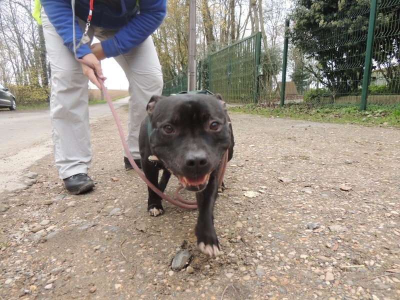 Fidji -Staffie Mercre27