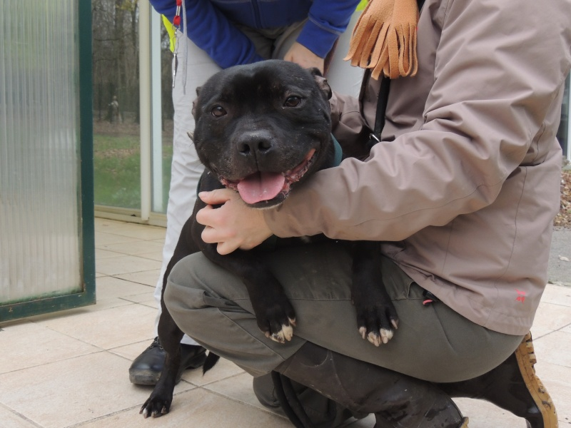 Fidji -Staffie Mercre31