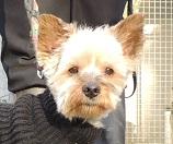 Papotage sur les chiens qui bénéficient de l'Opération Doyen - Page 4 Mercre83