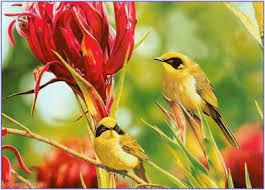 """Concours  photo # 13 : Les animaux """" fleuris"""" - Page 14 Oiseau10"""