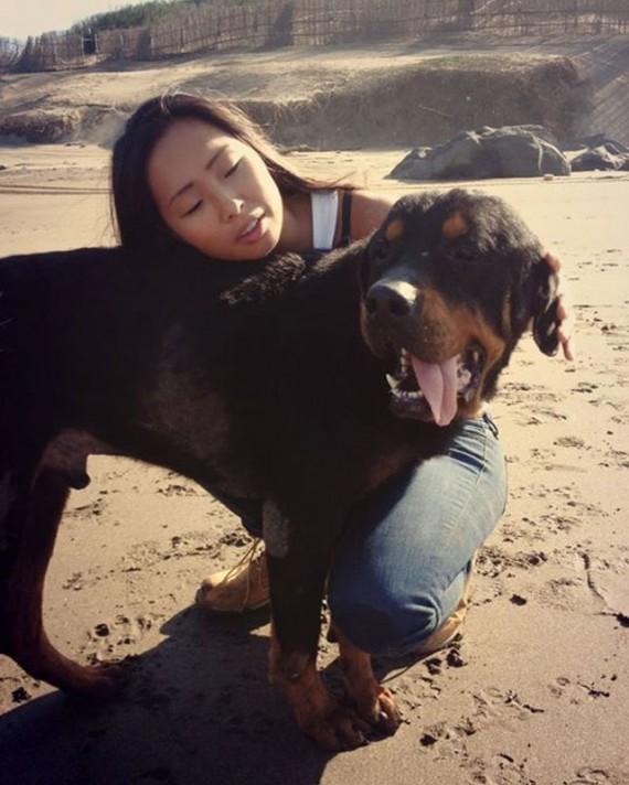 Coup de coeur-  Un jeune rottweiler à l'agonie est récupéré par un ami des bêtes : sa transformation est impressionnanteLa belle histoire de Pénélope Rotty213