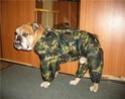 Одежда для животных Image010