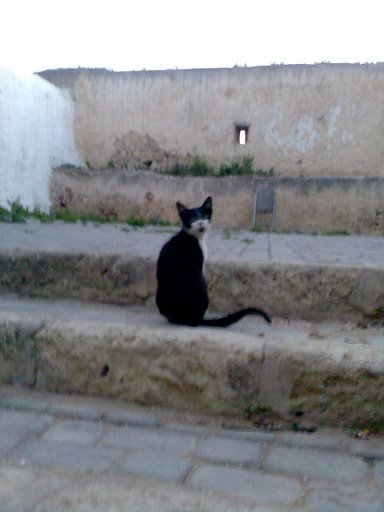 Chat maroc 24