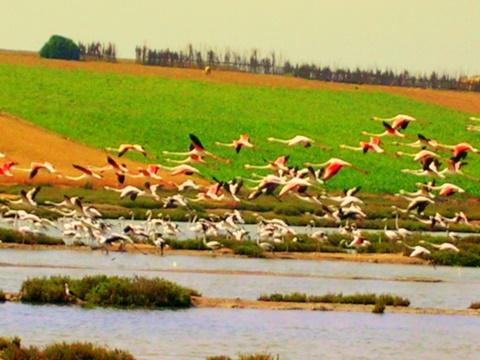 .... El-jadida vers Oualidia Oiseau11