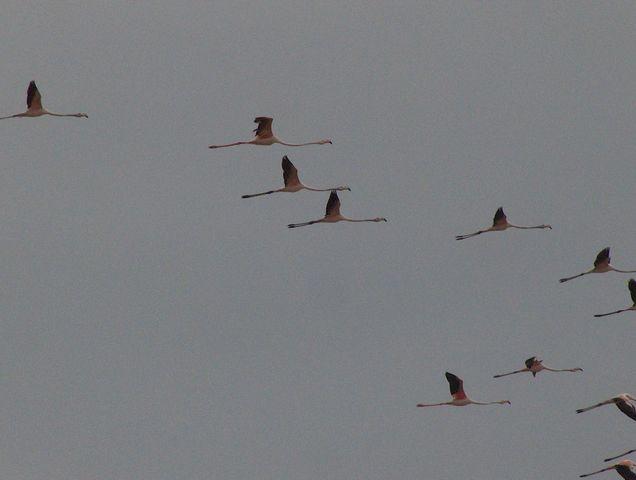 .... El-jadida vers Oualidia Oiseau14