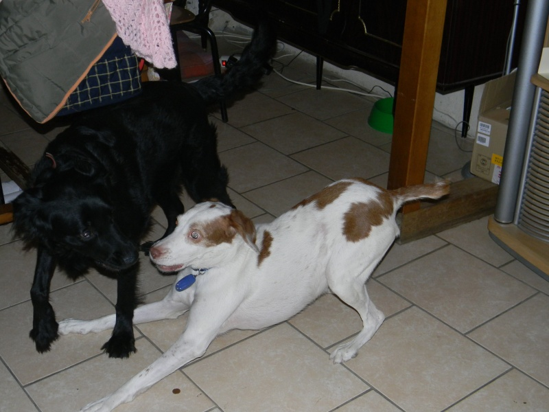relka x pointer dept84 9ans  ADOPTEE Relka_10
