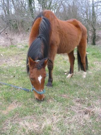 DOUCE - ONC Poney née en 1990 (maltraitance) Douce_12