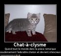 (De)Motivational Poster et Dialogues de Bêtes Chatac10