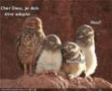 (De)Motivational Poster et Dialogues de Bêtes - Page 6 Hou10