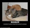 (De)Motivational Poster et Dialogues de Bêtes Maman10