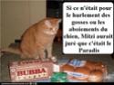 (De)Motivational Poster et Dialogues de Bêtes - Page 4 Paradi10