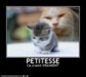 (De)Motivational Poster et Dialogues de Bêtes Petite10