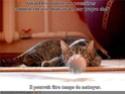 (De)Motivational Poster et Dialogues de Bêtes - Page 4 Poussi10