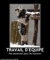 (De)Motivational Poster et Dialogues de Bêtes Teamwo10
