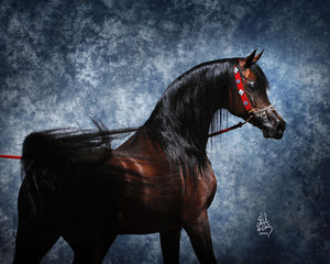 خيول عربية اصيله للبيع السعودية 2016 313
