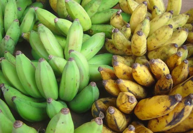 تحميل كتاب طريقة زراعة الموز في البيوت البلاستيكية Green_10