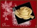 joyeux noël Roses_10