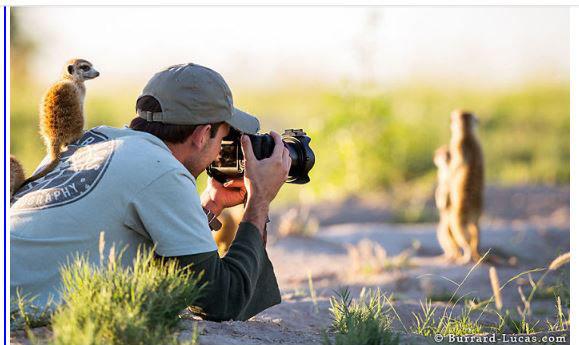 D'autres photographes chanceux... Chien_14