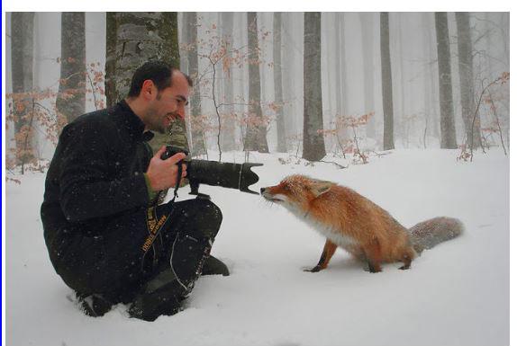 des photographes chanceux Fox_0010