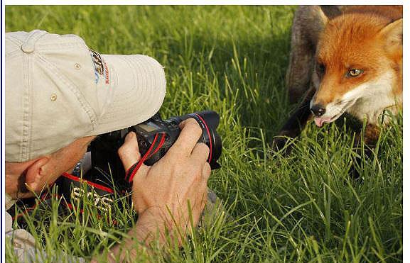 des photographes chanceux Fox_0011