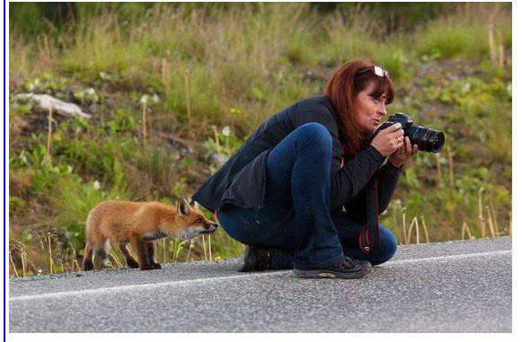 des photographes chanceux Fox_0013