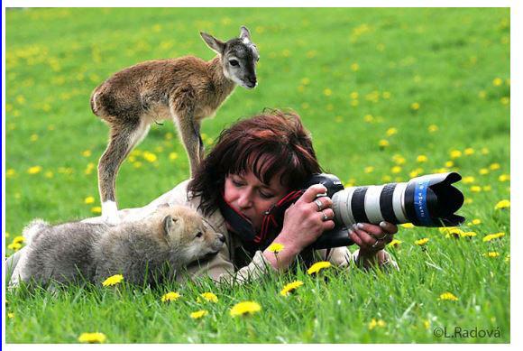 D'autres photographes chanceux... Isard11