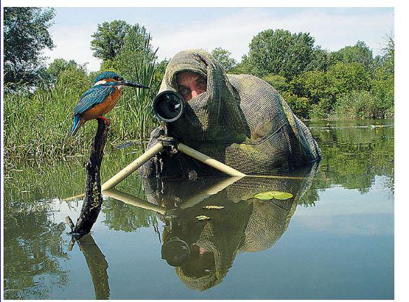 D'autres photographes chanceux... M_pych10